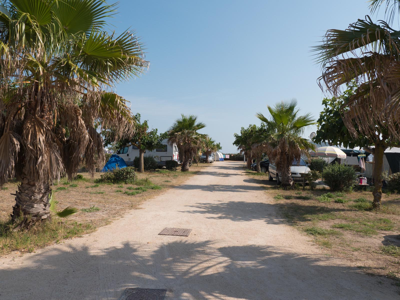 Campsite by the sea with palm trees