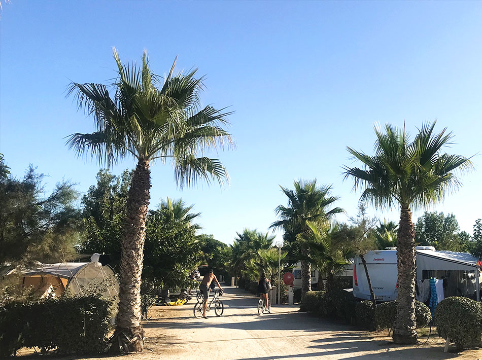 palm tree and large driveway, bicycles, vias holidays