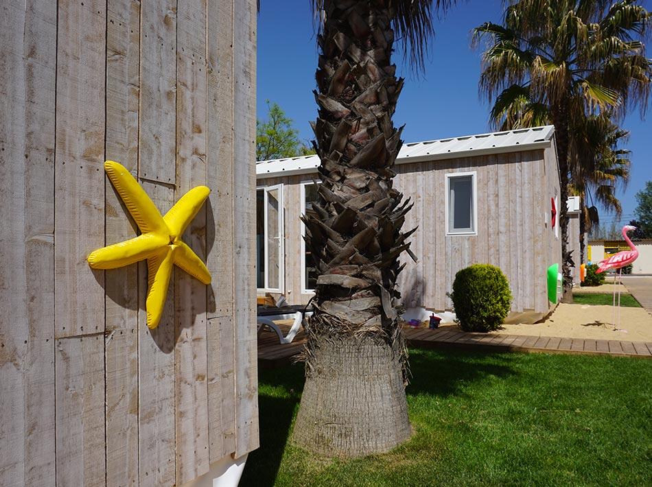palmier soleil sable gazon