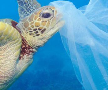 Opération nettoyage des plages à Vias … engagez-vous pour l'environnement avec le camping Farret !