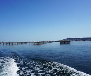 das Meer auf dem Teller: die Austern des Bassins de Thau